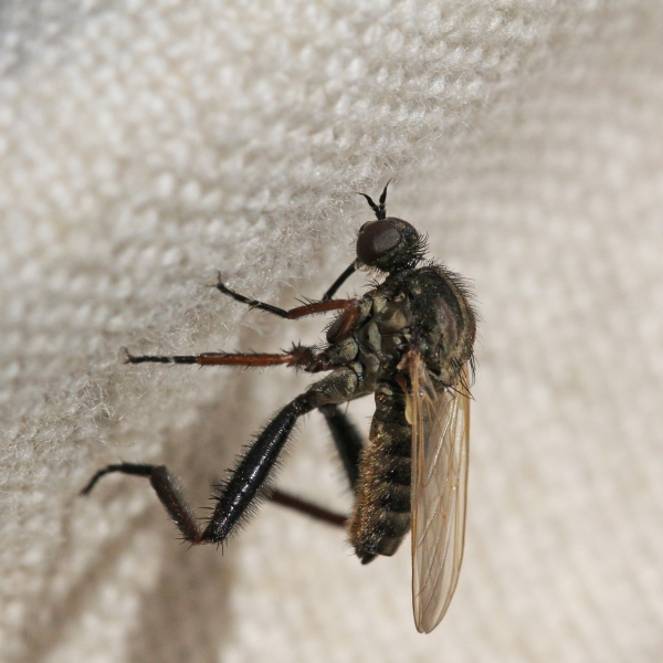 Empis 753s_AD_cr.jpg